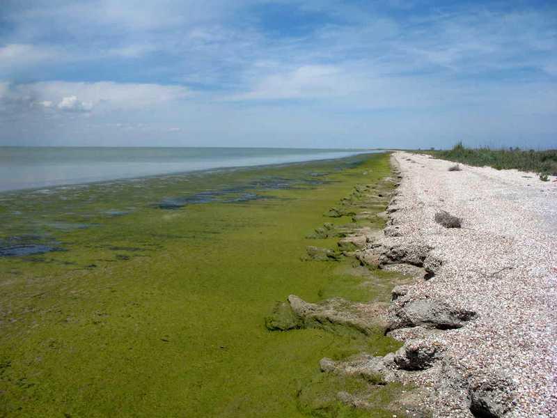 ForPost - Новости : Закрытие Северо-Крымского канала оказалось на руку браконьерам