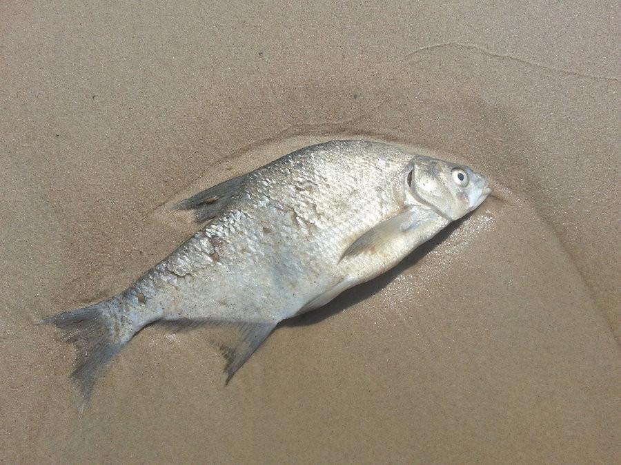 ForPost - Новости : Методы массового истребления рыбы электричеством спрячут от севастопольцев