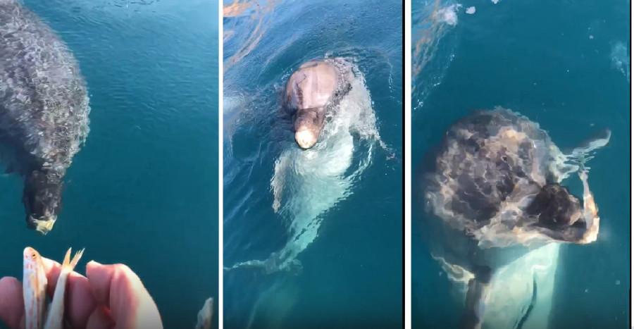 ForPost - Новости : В Севастополе дельфины завтракают у балаклавских рыбаков