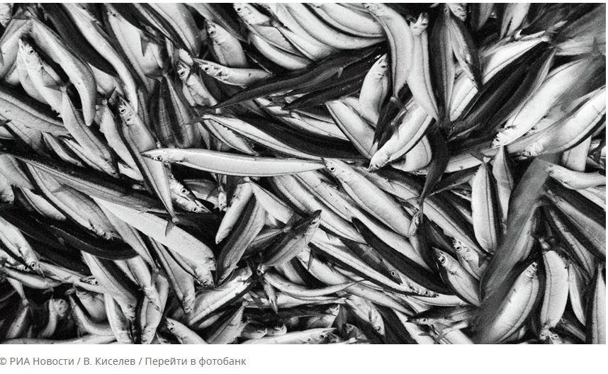 ForPost - Новости : Названы пять признаков рыбы, которую нельзя есть
