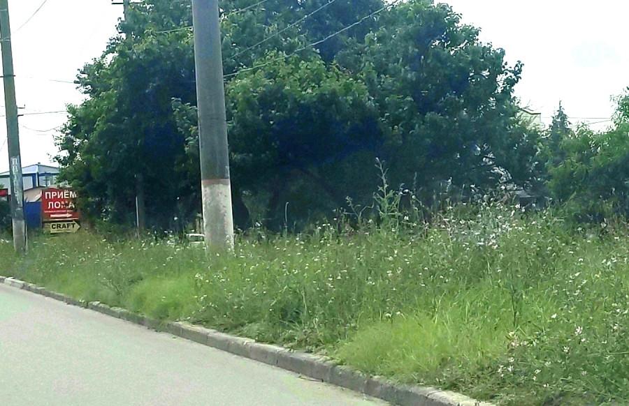 ForPost - Новости : Севастопольские земли захватывает привозная амброзия