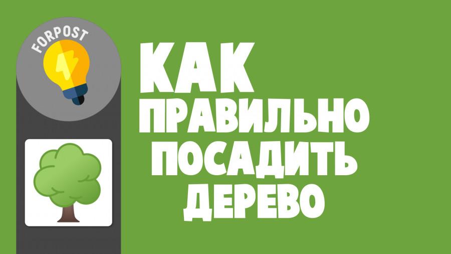 ForPost - Новости : Как посадить у себя во дворе кедр, сосну или ель