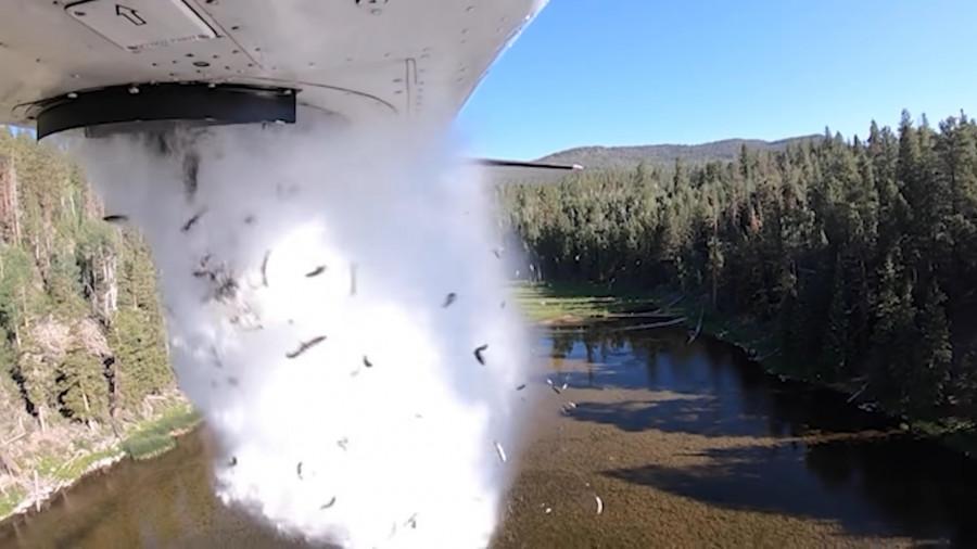 ForPost - Новости : Из самолёта сбросили тысячи рыб. Видео