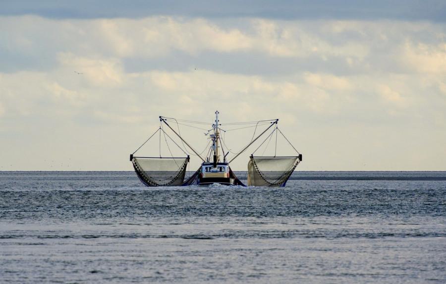 ForPost - Новости : В Севастополе идёт работа над линейкой новых рыболовецких судов