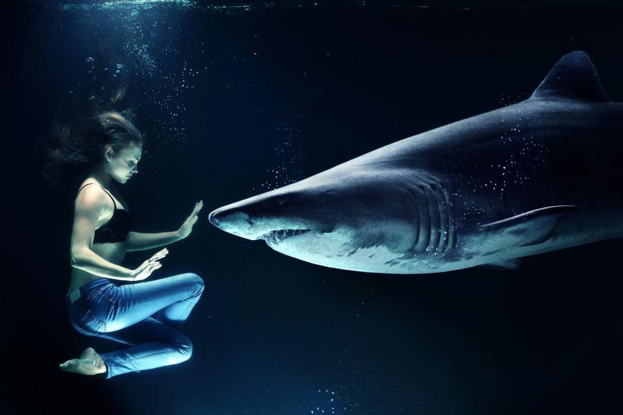 ForPost - Новости : Атаки акул на людей будут называть по-другому, чтобы исправить имидж хищников