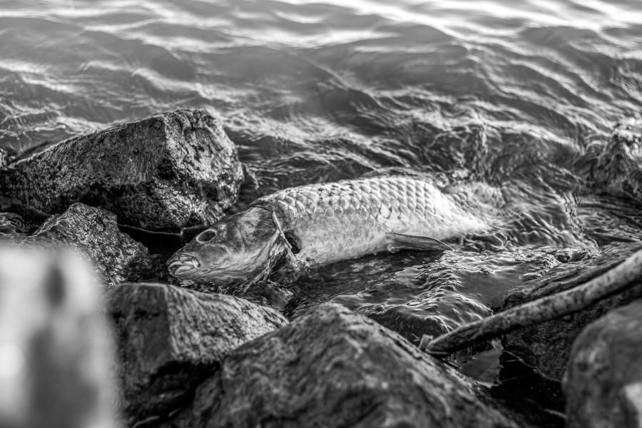 ForPost - Новости : В США из-за расизма переименуют рыбу