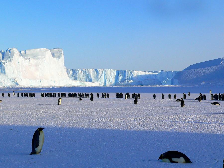 ForPost - Новости : В Британии заявили, что Россия намерена захватить Антарктиду