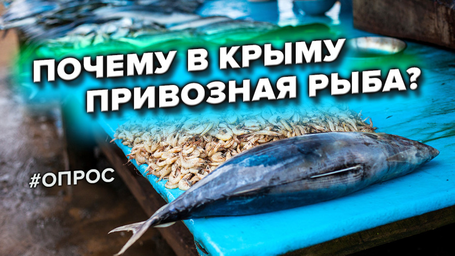 ForPost - Новости : Понаехавшая рыба захватила прилавки Севастополя. Почему? — опрос