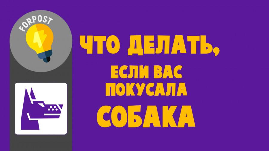 ForPost - Новости : Что делать, если вас укусила собака