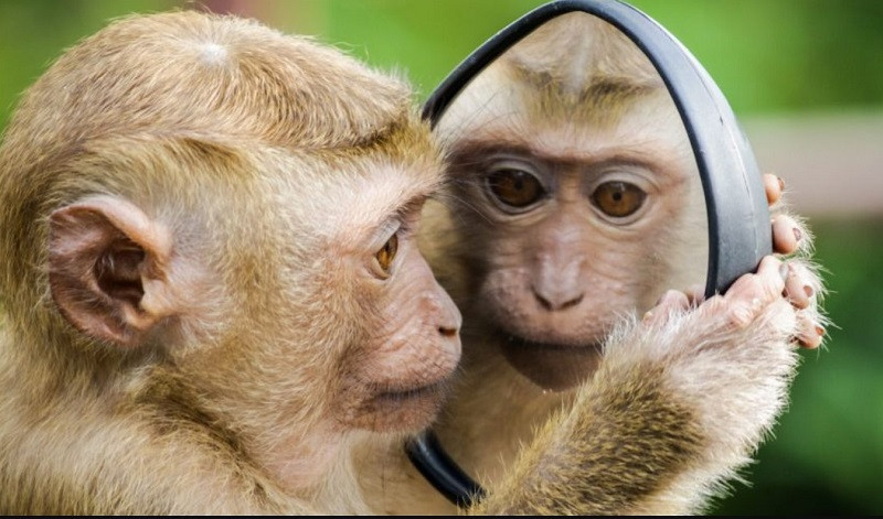 ForPost - Новости : Россиян предупредили о риске заражения оспой обезьян