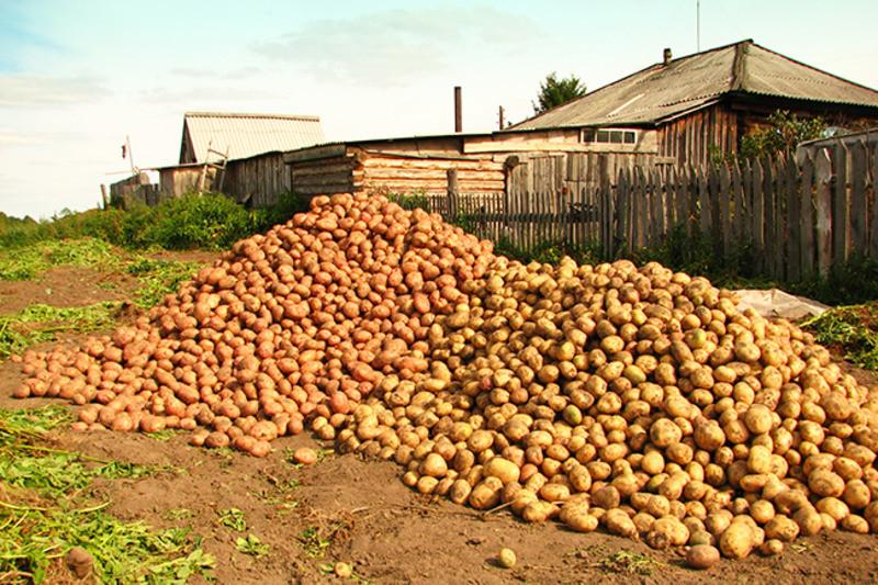 ForPost - Новости : Сможет ли Россия собрать анонсированный Путиным урожай