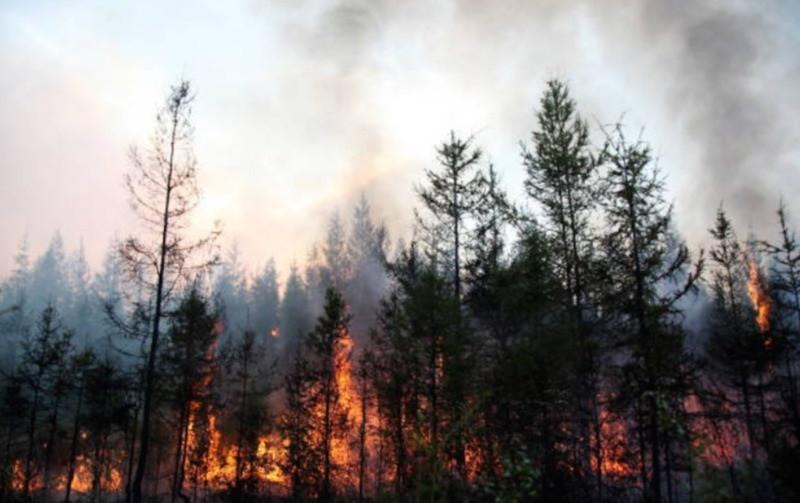 ForPost - Новости : Горим и материмся: кому выгодно политизировать лесные пожары