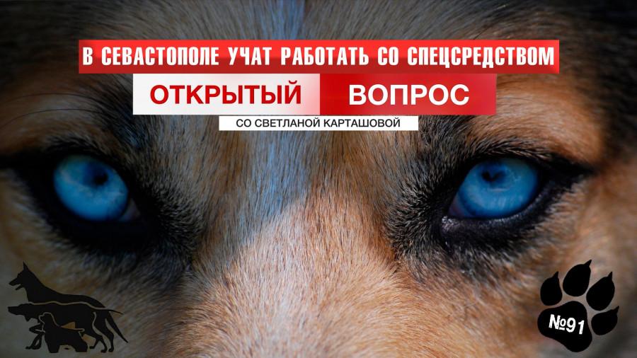 ForPost - Новости : В Севастополе учатся искать «закладки» и пропавших людей