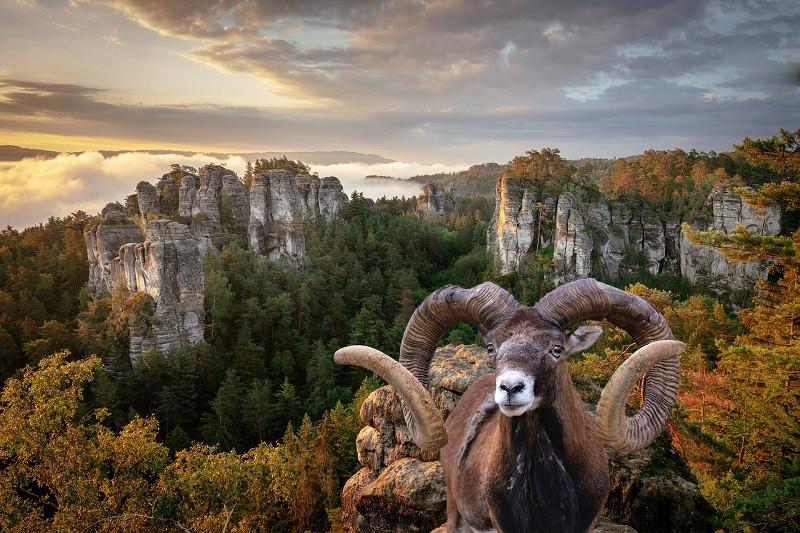 ForPost - Новости : Охотничье лобби в России поставило под угрозу животных из Красной книги