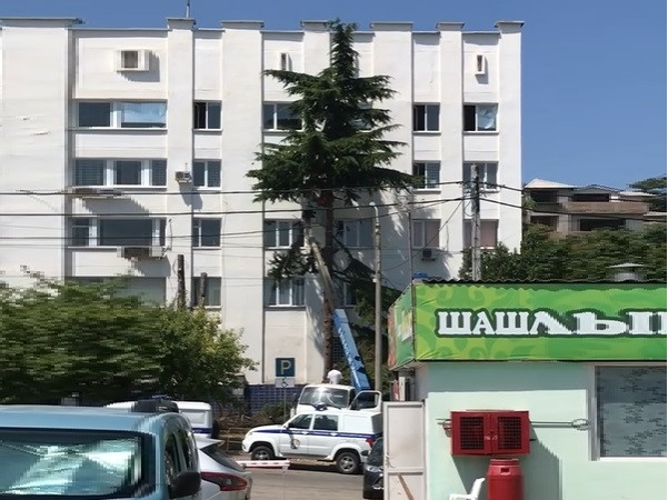 ForPost - Новости : Рядом с полицией Севастополя срубили два кедра