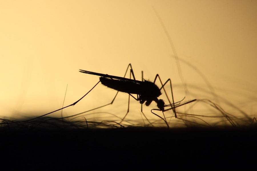 ForPost - Новости : Врачи рассказали, как избавиться от зуда после укусов комаров