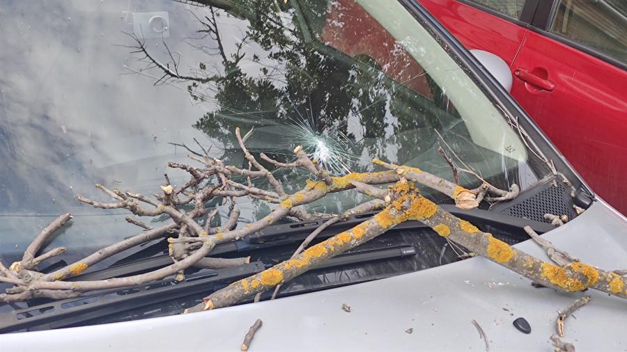 ForPost - Новости : СевСети #1288. Дилемма с мерседесом, падающие деревья и севастопольское такси
