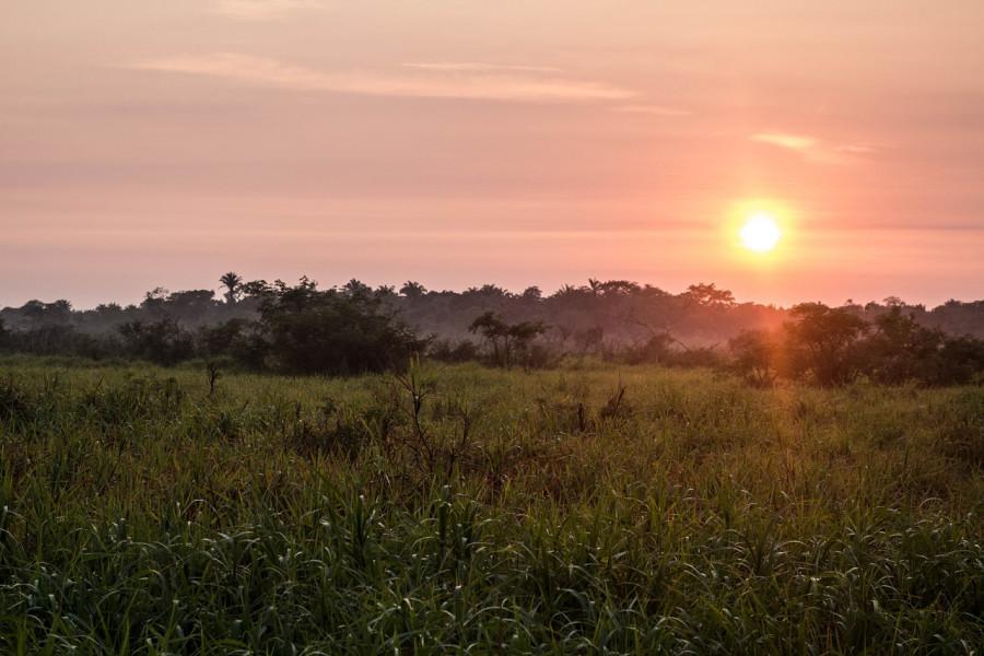 ForPost - Новости : Тропические леса, ранее спасавшие мир, теперь приближают катастрофу
