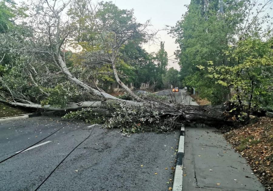 ForPost - Новости : В Севастополе проводят ревизию деревьев