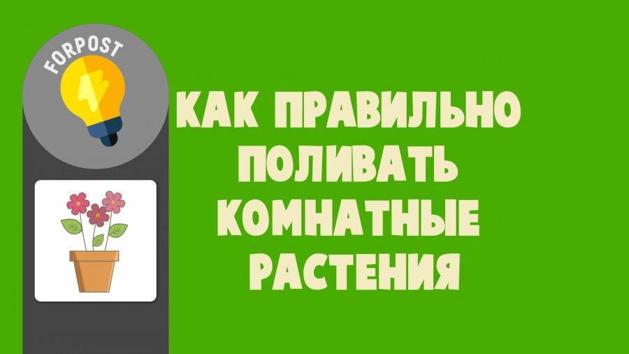 ForPost - Новости : Как правильно поливать комнатные растения