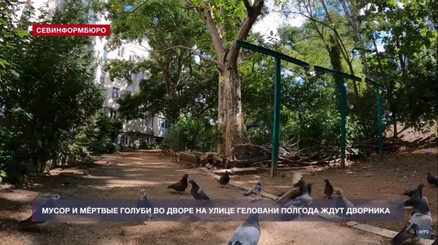 ForPost - Новости : Мёртвые голуби и мусор более полугода ожидают дворника в севастопольском дворе