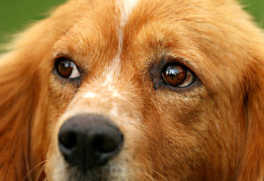 ForPost - Новости : В Севастополе спасли собаку из технического колодца