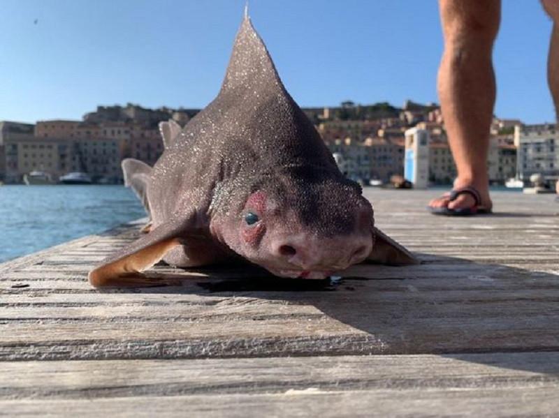 Моряки поймали необычную рыбу и решили, что это мутант