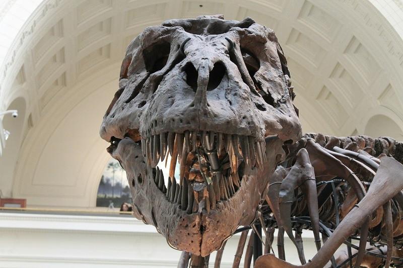 ForPost - Новости : Крымчанин продаёт «кость динозавра» за 20 миллионов рублей