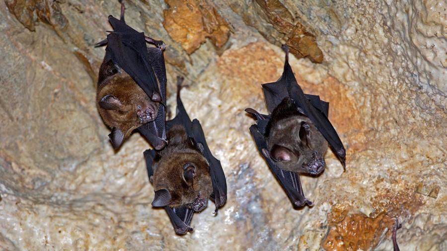 ForPost - Новости : Ученые заявили о новом доказательстве природного происхождения COVID-19