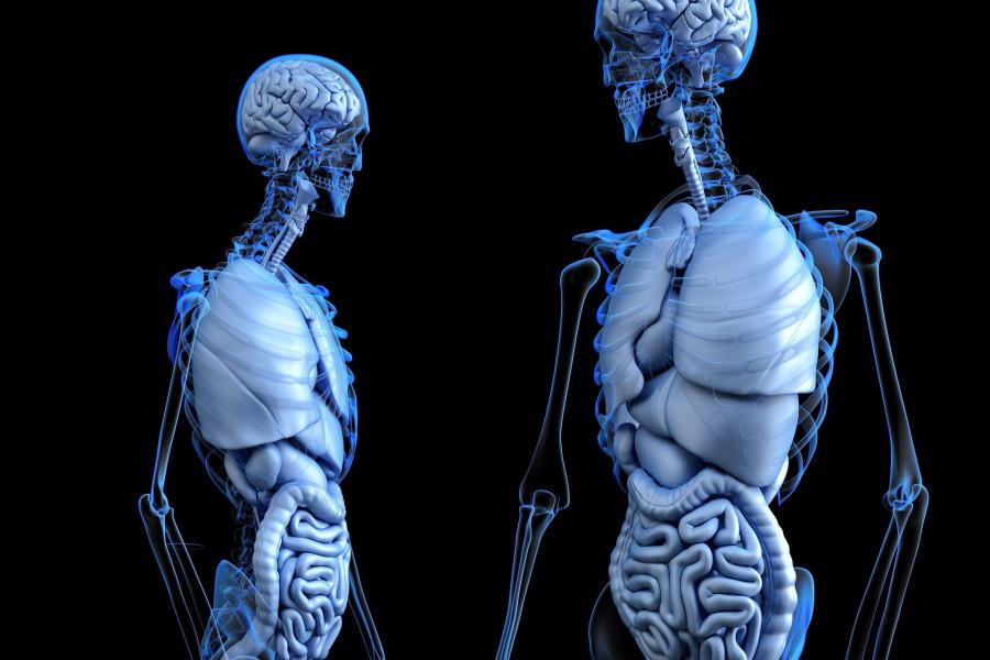 ForPost - Новости : Установлена связь между здоровьем кишечника и психическими заболеваниями
