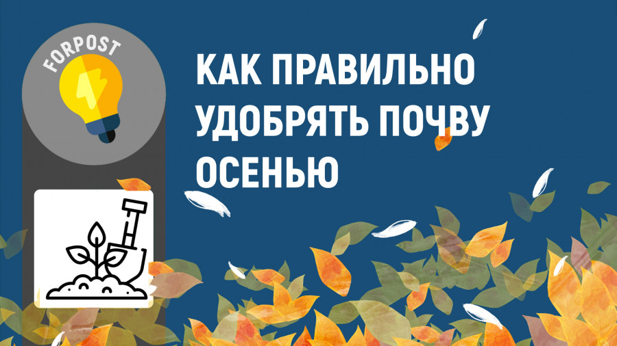 ForPost - Новости : Как осенью правильно удобрять почву на огороде