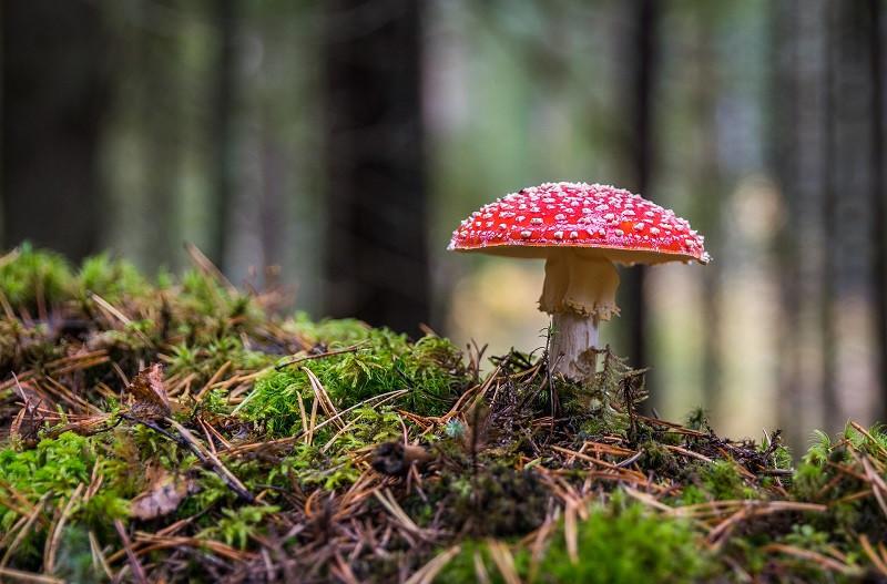 ForPost - Новости : Крымских грибников от штрафа защищает охрана