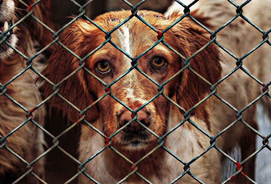 ForPost - Новости: Защитников животных в Севастополе обвинили во лжи