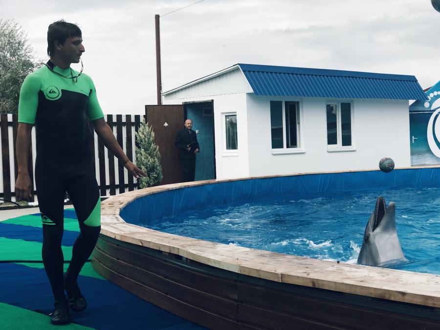 ForPost - Новости: Дельфины и морские котики переехали из Артбухты в новое место