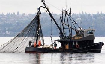 ForPost - Новости : В Чёрном море запретили вылов удивительно ценной рыбы