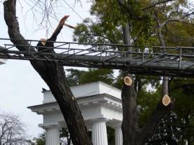 ForPost - Новости : Севастопольские власти привели в порядок дерево, покалечившее девушку на Приморском бульваре