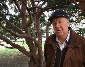 ForPost - Новости : В каком состоянии деревья на Приморском бульваре? Мнение дендролога