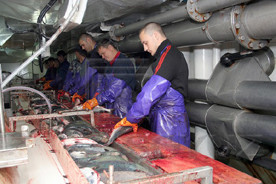 """ForPost - Новости : После крушения в Охотском море траулера """"Дальний Восток"""" спасены 63 члена экипажа"""