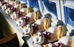 ForPost - Новости : Губернатор Севастополя взял на контроль расследование серийного убийства кошек журналистов