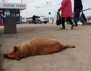ForPost - Новости : Жатва смерти: в Севастополе массово травят животных 18+