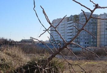 ForPost - Новости : В Севастополе подтвердили факт массового уничтожения краснокнижных деревьев