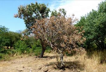 ForPost - Новости : В Севастополе для спасения стройки погубили 60 краснокнижных растений