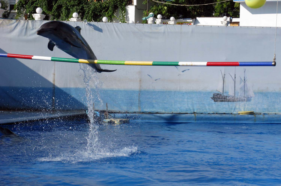 ForPost - Новости: Севастопольский дельфинарий в Артбухте открыл сезон 2011