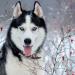 Аватар пользователя Хаски911