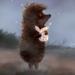 Аватар пользователя Ёжик в тумане
