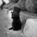 Аватар пользователя Stas Black
