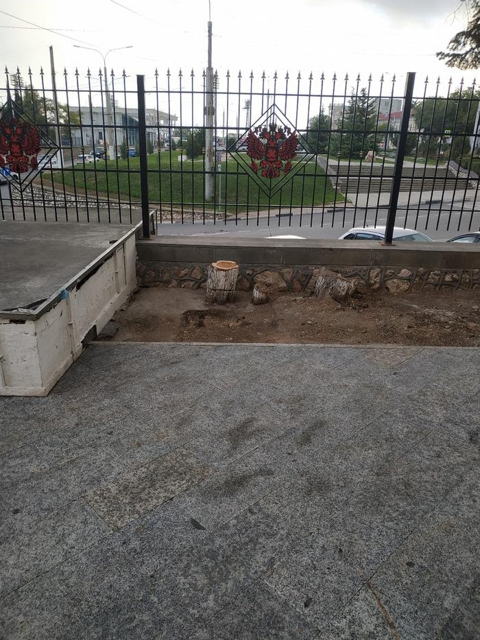 На площади Восставших в Севастополе началась вырубка деревьев